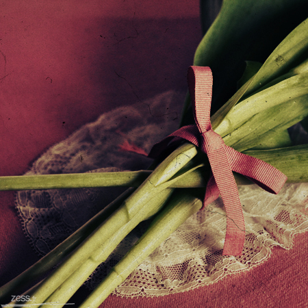 macro tulipe
