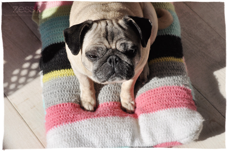carlin pug