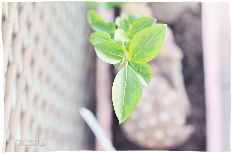 plante terrasse blog